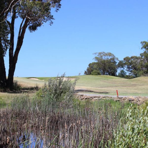 hole 11 water and traps